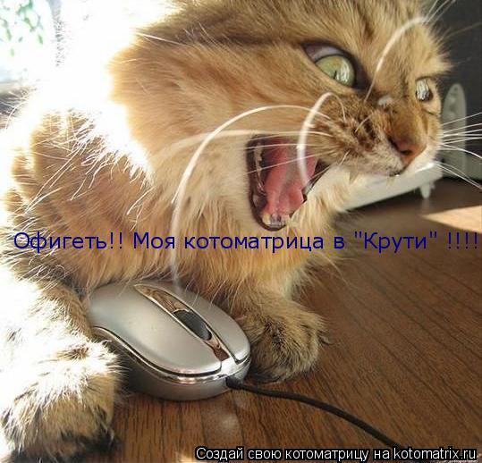"""Котоматрица: Офигеть!! Моя котоматрица в """"Крути"""" !!!!"""