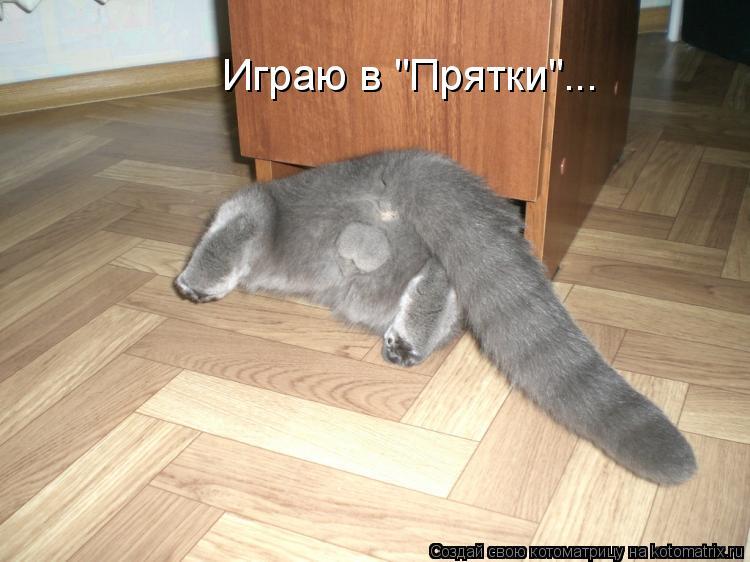 "Котоматрица: Играю в ""Прятки""..."