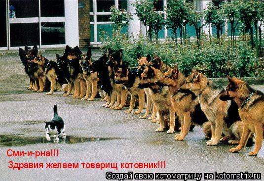 Котоматрица: Здравия желаем товарищ котовник!!! Сми-и-рна!!!