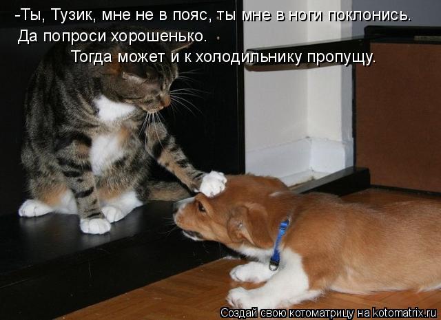 Котоматрица: -Ты, Тузик, мне не в пояс, ты мне в ноги поклонись.  Да попроси хорошенько.  Тогда может и к холодильнику пропущу.