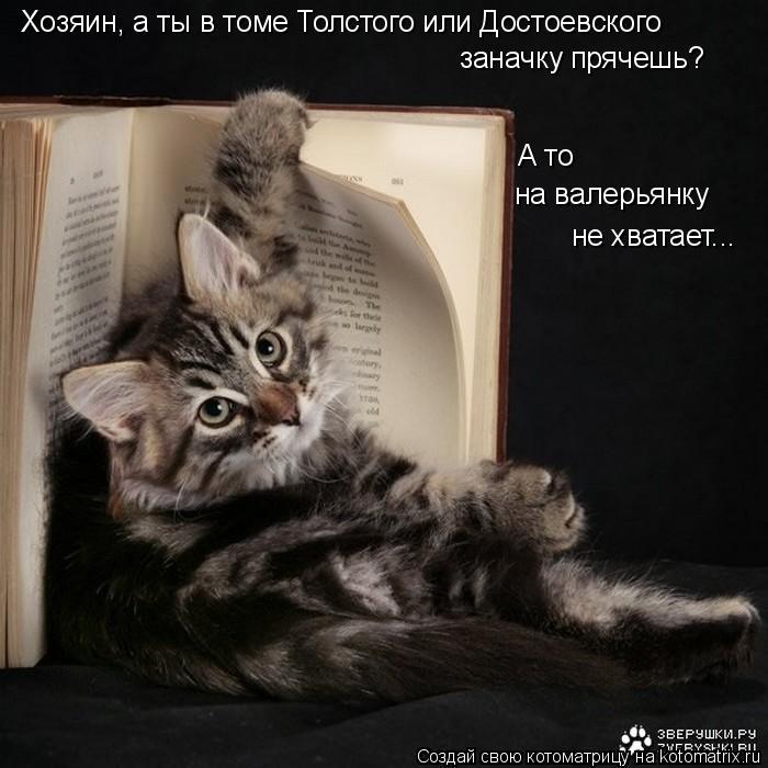 Котоматрица: Хозяин, а ты в томе Толстого или Достоевского заначку прячешь? А то  на валерьянку не хватает...