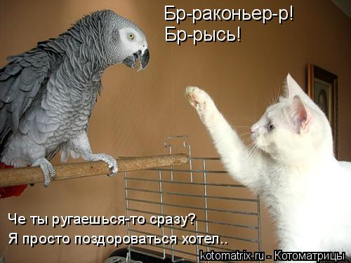 Котоматрица: Бр-раконьер-р! Бр-рысь! Я просто поздороваться хотел.. Че ты ругаешься-то сразу?