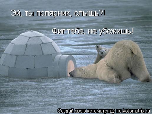 Котоматрица: Эй, ты полярник, слышь?! Фиг тебе, не убежишь!