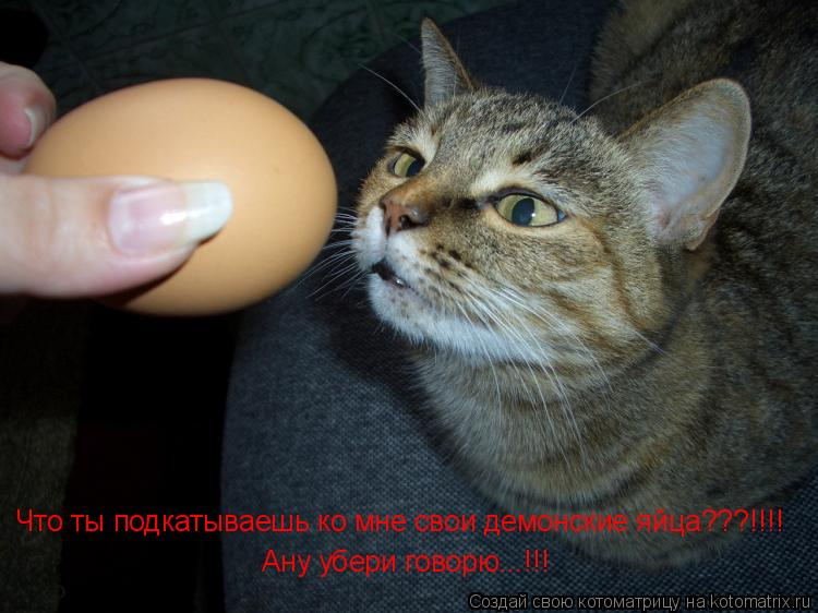 Котоматрица: Что ты подкатываешь ко мне свои демонские яйца???!!!! Ану убери говорю...!!!