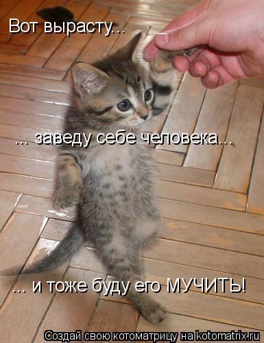 Первые шаги - котёнок.