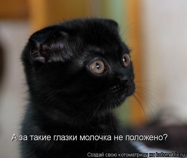 Котоматрица: А за такие глазки молочка не положено?