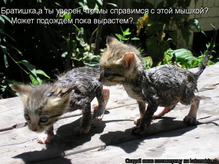 Котоматрица: Братишка,а ты уверен,что мы справимся с этой мышкой? Может подождём пока вырастем?...