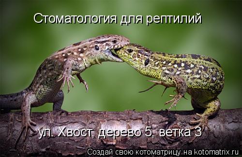 Котоматрица: Стоматология для рептилий ул. Хвост, дерево 5, ветка 3