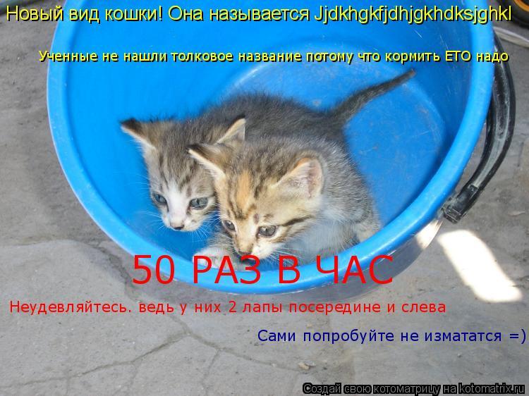 Котоматрица: Новый вид кошки! Она называется Jjdkhgkfjdhjgkhdksjghkl Ученные не нашли толковое название потому что кормить ЕТО надо 50 РАЗ В ЧАС  Неудевляйтесь. ве