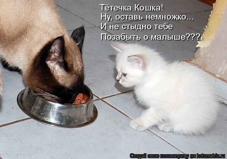 Котоматрица: Тётечка Кошка! Ну, оставь немножко... И не стыдно тебе Позабыть о малыше???