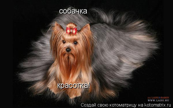 Котоматрица: собачка красотка!