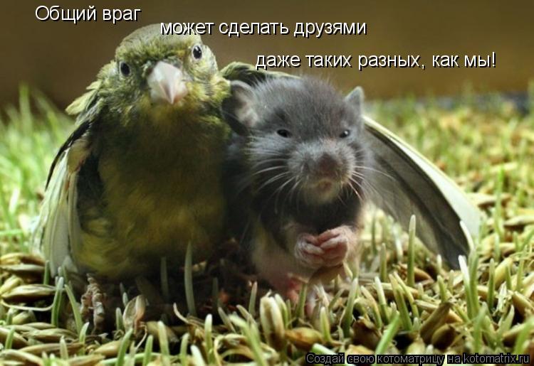 Котоматрица: Общий враг может сделать друзями даже таких разных, как мы!