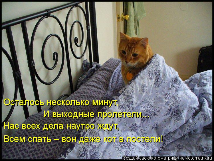Котоматрица: Осталось несколько минут, И выходные пролетели... Нас всех дела наутро ждут, Всем спать – вон даже кот в постели!