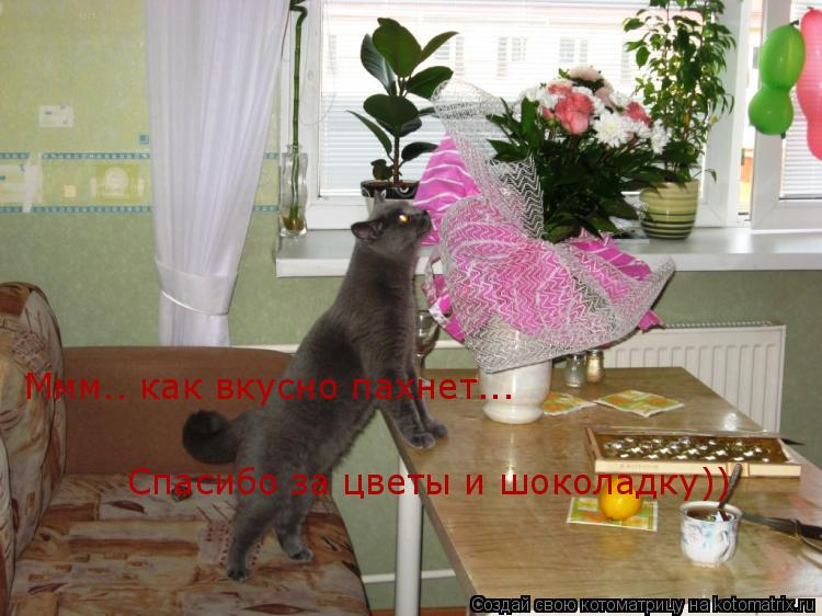 Котоматрица: Ммм.. как вкусно пахнет... Спасибо за цветы и шоколадку))