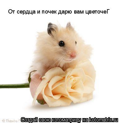 Котоматрица: От сердца и почек дарю вам цветочеГ