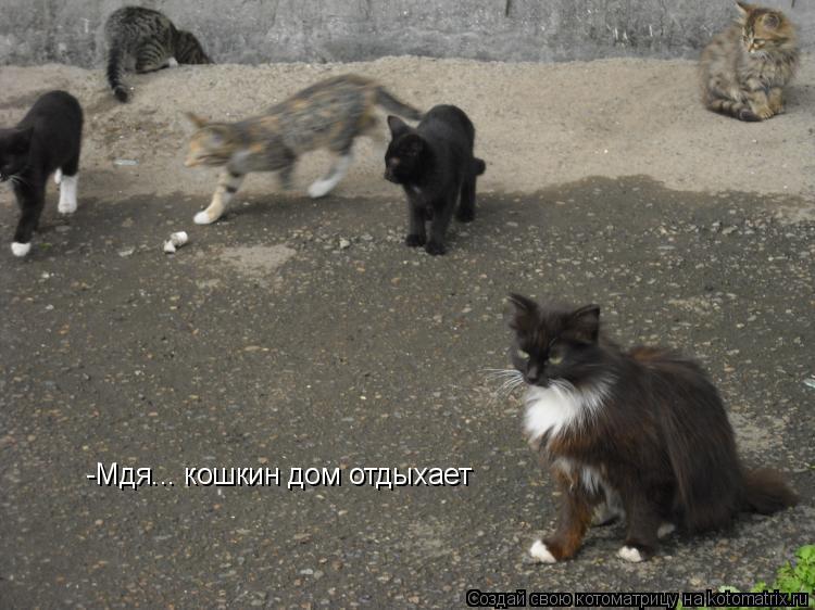 Котоматрица: -Мдя... кошкин дом отдыхает