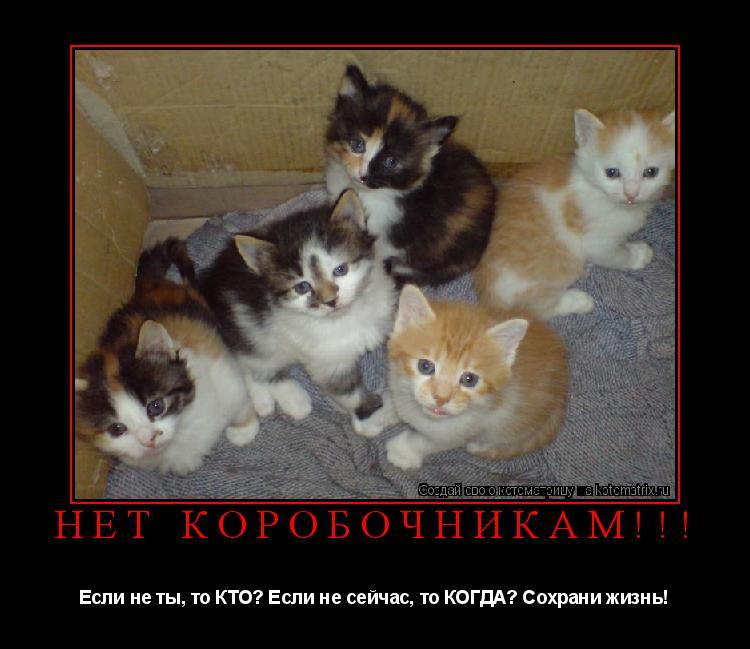 Котоматрица: НЕТ КОРОБОЧНИКАМ!!! Если не ты, то КТО? Если не сейчас, то КОГДА? Сохрани жизнь!