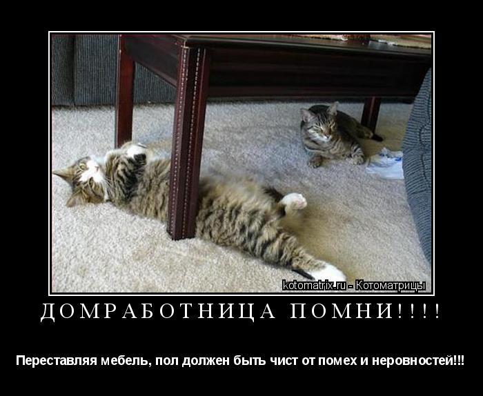 Котоматрица: Домработница помни!!!! Переставляя мебель, пол должен быть чист от помех и неровностей!!!