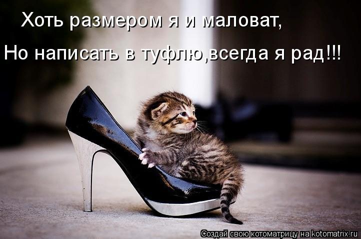 Котоматрица: Хоть размером я и маловат, Но написать в туфлю,всегда я рад!!!