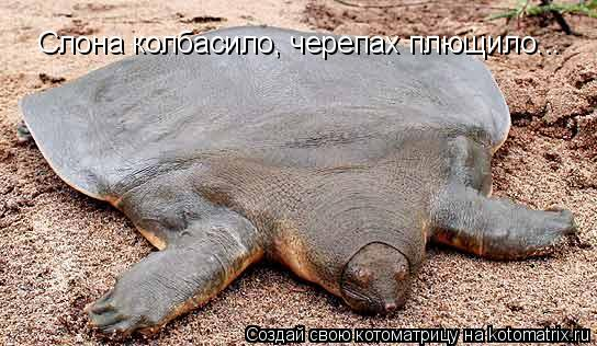 Котоматрица: Слона колбасило, черепах плющило...