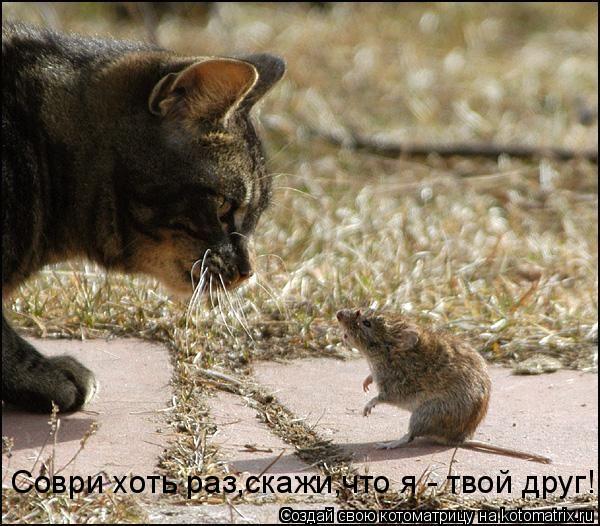 Котоматрица: Соври хоть раз,скажи,что я - твой друг!