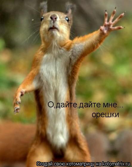Котоматрица: О,дайте,дайте мне... орешки