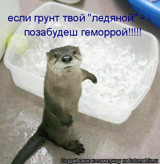"""Котоматрица: если грунт твой """"ледяной"""" - позабудеш геморрой!!!!!"""