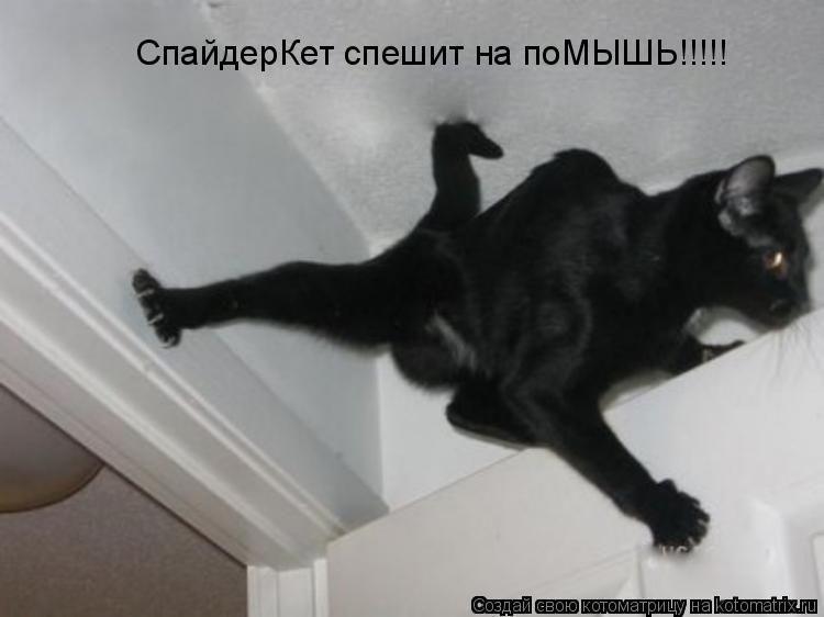 Котоматрица: СпайдерКет спешит на поМЫШЬ!!!!!
