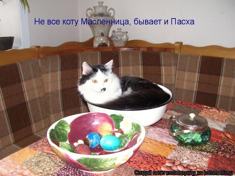 Котоматрица: Не все коту Масленница, бывает и Пасха