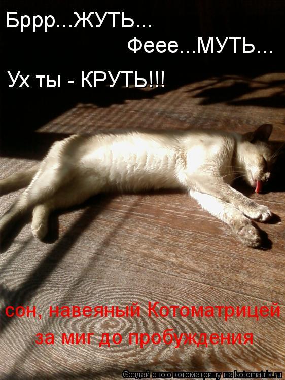 Котоматрица: Бррр...ЖУТЬ... Феее...МУТЬ... Ух ты - КРУТЬ!!! сон, навеяный Котоматрицей за миг до пробуждения