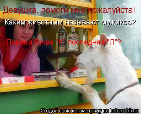 """Котоматрица: Девушка, помоги мне пожалуйста!  Каким животным называют мужиков? Первая буква """"К"""" последняя """"Л""""?"""