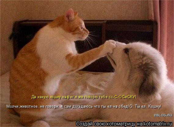 Котоматрица: Молчи,животное..не говори..я сам догадаюсь что ты ел на обед!О..Ты ел..Кошку! Да какую кошку нафиг я же говорю тебе сс-С-ОСиСКУ!