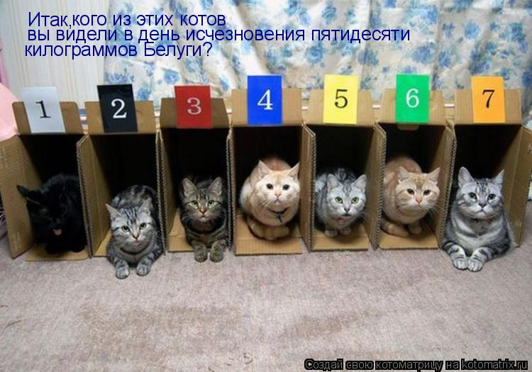 Котоматрица: Итак,  кого из этих котов вы видели в день исчезновения пятидесяти килограммов Белуги?