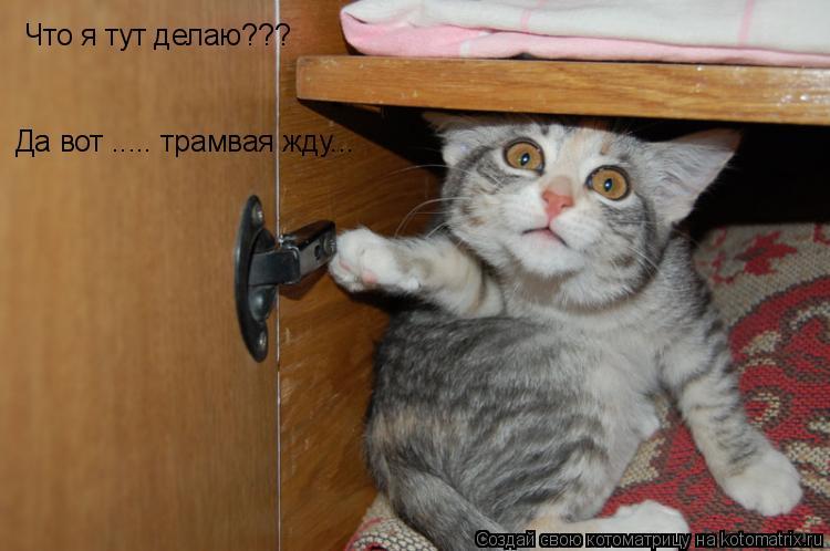 Котоматрица: Что я тут делаю??? Да вот ..... трамвая жду...