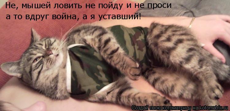 Котоматрица: Не, мышей ловить не пойду и не проси а то вдруг война, а я уставший!