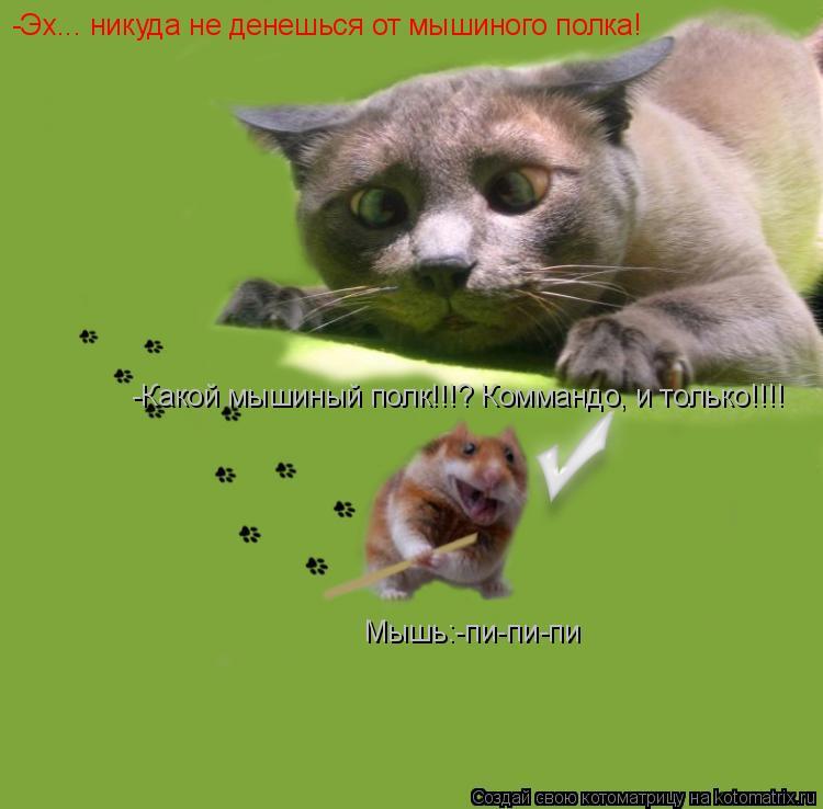 Котоматрица: -Эх... никуда не денешься от мышиного полка! -Какой мышиный полк!!!? Коммандо, и только!!!! Мышь:-пи-пи-пи