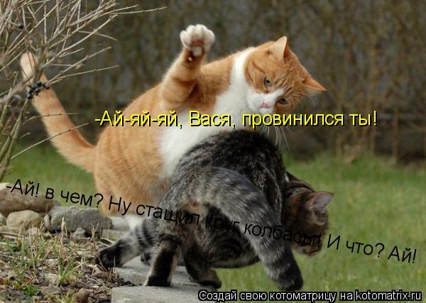 Котоматрица: -Ай-яй-яй, Вася, провинился ты! -Ай! в чем? Ну стащил круг колбасы! И что? Ай!