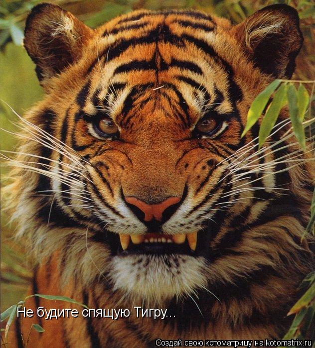 Котоматрица: Не будите спящую Тигру...