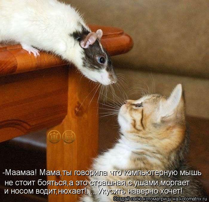 Котоматрица: -Маамаа! Мама,ты говорила что компьютерную мышь  не стоит бояться,а это страшная,с ушами,моргает и носом водит,нюхает!.....Укусить наверно хоч