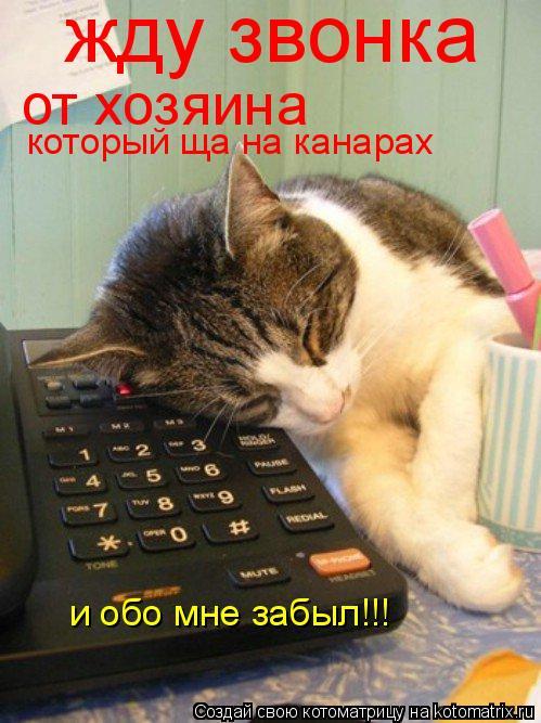 Котоматрица: жду звонка от хозяина который ща на канарах и обо мне забыл!!!