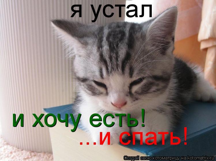 Котоматрица: я устал и хочу есть! ...и спать!