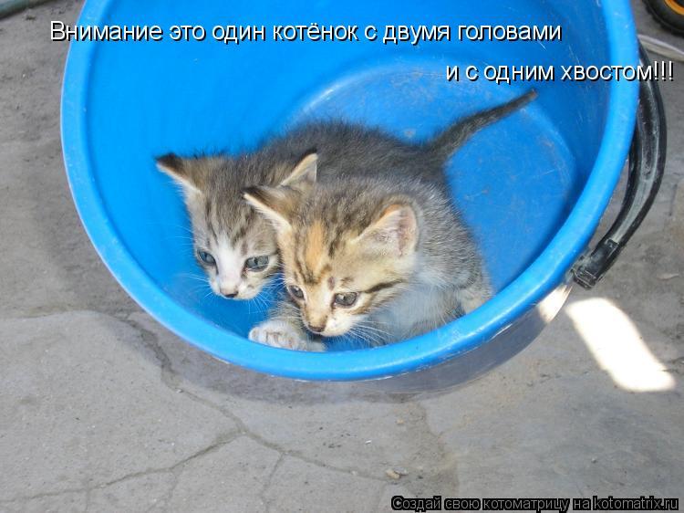 Котоматрица: Внимание это один котёнок с двумя головами и с одним хвостом!!!