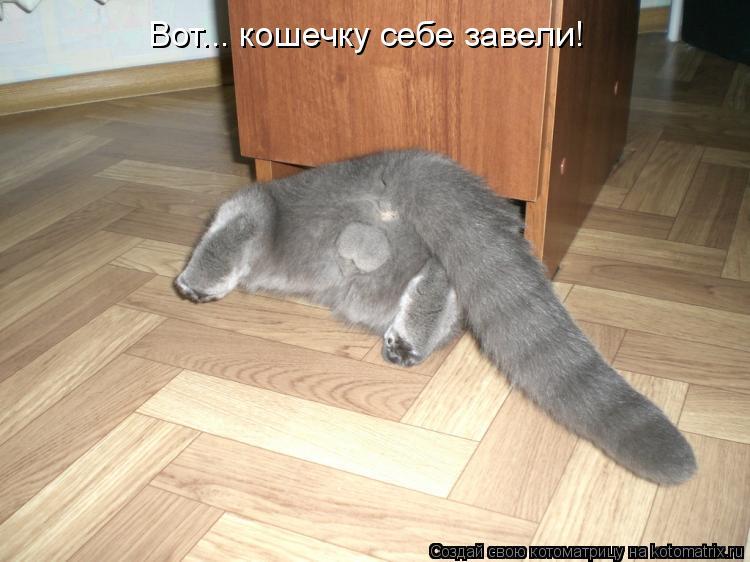 Котоматрица: Вот... кошечку себе завели!
