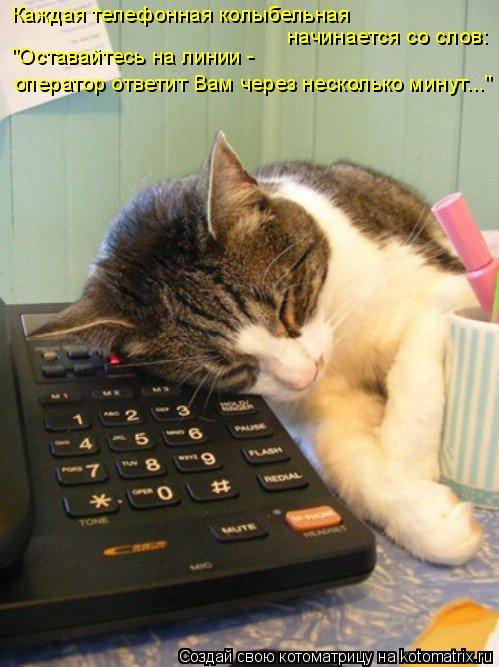 """Котоматрица: Каждая телефонная колыбельная  начинается со слов:  """"Оставайтесь на линии -  оператор ответит Вам через несколько минут..."""""""