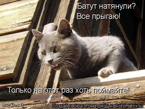 Котоматрица: Батут натянули? Все прыгаю! Только на этот раз хоть поймайте Только на этот раз хоть поймайте!