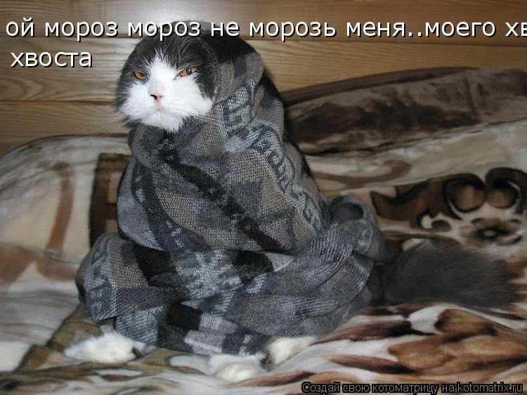 Котоматрица: ой мороз мороз не морозь меня..моего хвоста хвоста