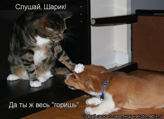 """Котоматрица: Слушай, Шарик! Да ты ж весь """"горишь""""..."""