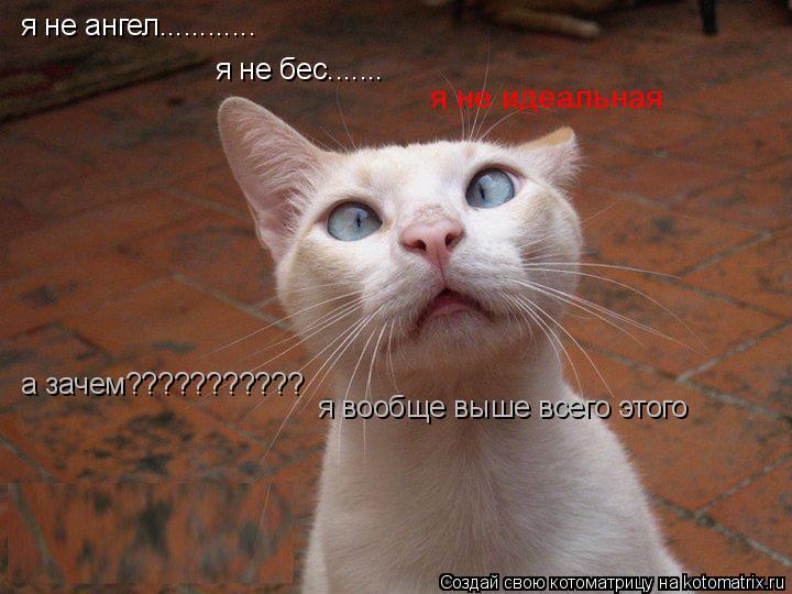 Котоматрица: я не ангел............ я не бес....... я не идеальная а зачем??????????? я вообще выше всего этого