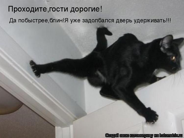 Котоматрица: Проходите,гости дорогие! Да побыстрее,блин!Я уже задолбался дверь удерживать!!!
