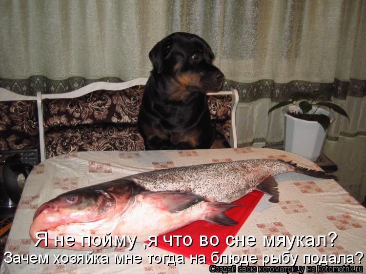 Котоматрица: Я не пойму ,я что во сне мяукал? Зачем хозяйка мне тогда на блюде рыбу подала?